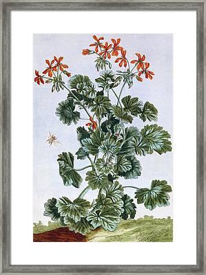 Yellow Flowered Cranesbill Framed Print by Pierre-Joseph Buchoz