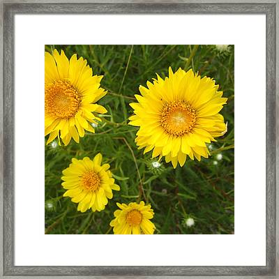 Yellow Flowers No. 1 Framed Print