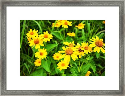 Yellow Flowers No. 2 Framed Print