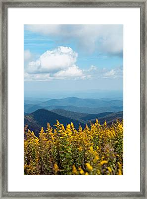 Yellow Flowers Along The Blue Ridge Mountains Framed Print by Kim Fearheiley