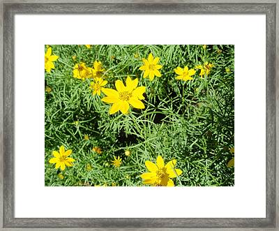 Framed Print featuring the photograph Yellow Flowers by Beth Akerman