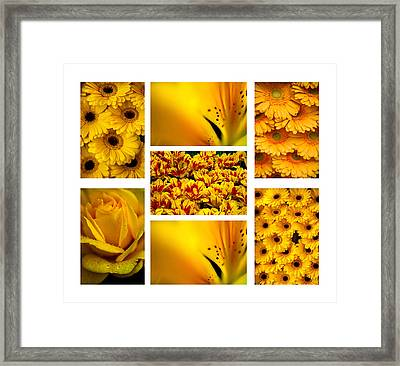 Yellow Flowers Collection. White. Polyptych Framed Print by Jenny Rainbow