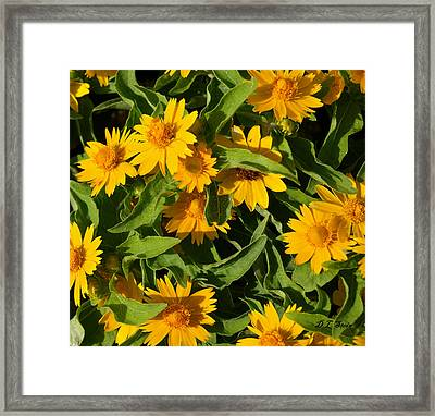 Yellow Flowers Framed Print by Dennis Stein