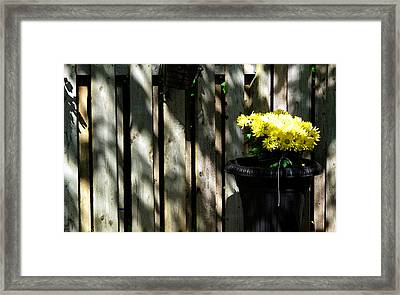 Yellow Flowers In A Black Flower Pot 2wc2 Framed Print