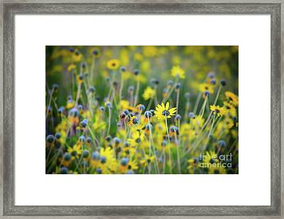 Framed Print featuring the photograph Yellow Flowers by Kelly Wade