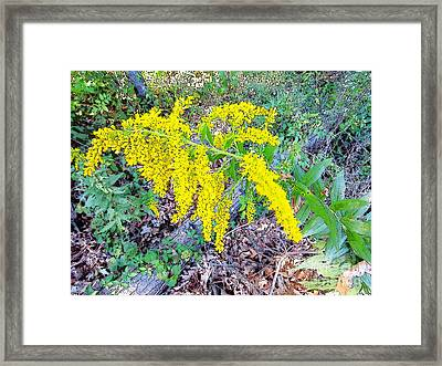 Yellow Flowers On Green Framed Print