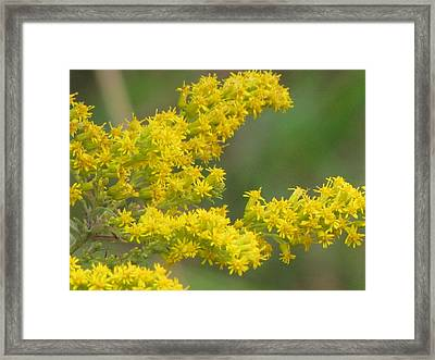 Yellow Flowers Framed Print by Sylvia Wanty