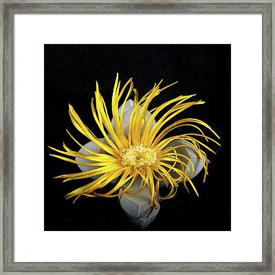Framed Print featuring the photograph Yellow Follower  by Catherine Lau