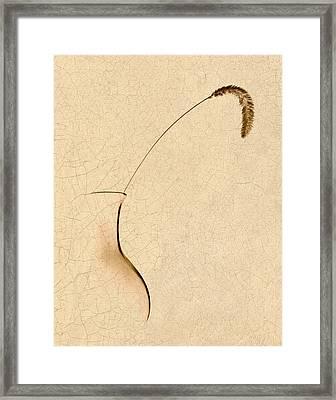 Yellow Foxtail Still Life Framed Print by Tom Mc Nemar