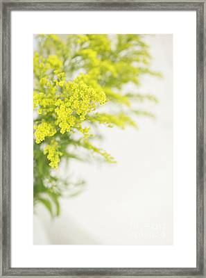 Yellow Froth Framed Print by Anne Gilbert
