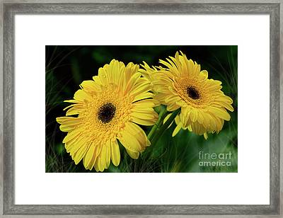 Framed Print featuring the photograph Yellow Gerbera Daisies By Kaye Menner by Kaye Menner