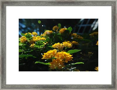 Yellow Girls Framed Print