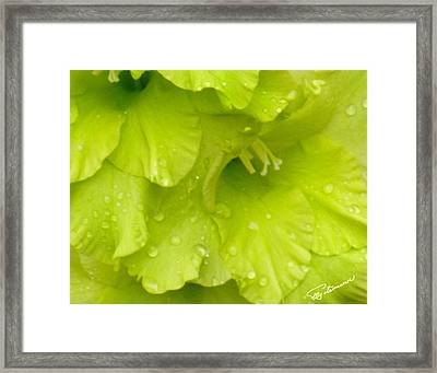 Framed Print featuring the photograph Yellow Gladiola Refreshed by Elly Potamianos