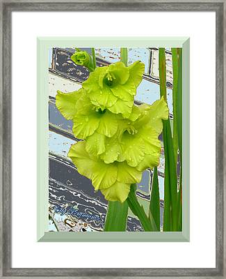 Framed Print featuring the pyrography Yellow Gladiolas by Elly Potamianos