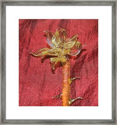 Yellow Glass Poinsettia Framed Print by Jon Curiel