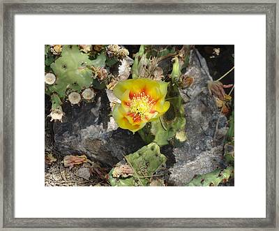Yellow Cactus Flower Blossom Framed Print