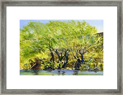 Yellow Green Willow Trees Framed Print by Sharon Freeman