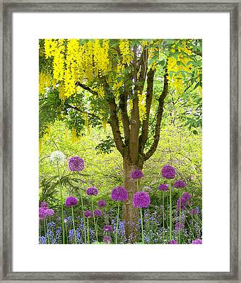 Yellow Hanging Hydrangea Tree Framed Print by Elizabeth Thomas
