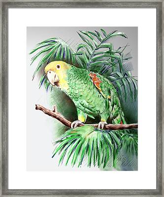 Yellow-headed Amazon Parrot Framed Print