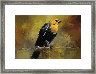 Framed Print featuring the photograph Yellow-headed Blackbird by Donna Kennedy