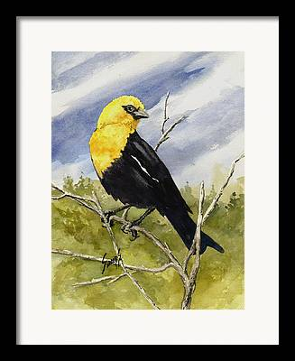 Yellow Beak Paintings Framed Prints