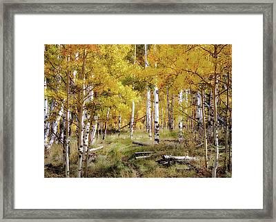 Yellow Heaven Framed Print by Jim Hill