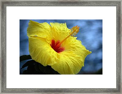 Framed Print featuring the photograph Yellow Hibiscus by Debbie Karnes