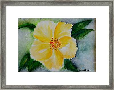 Yellow Hibiscus Framed Print by Jamie Frier