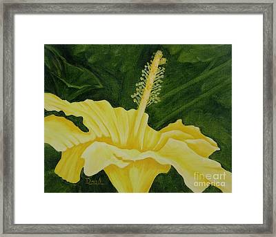 Yellow Hibiscus Opening To The Morning Framed Print by Mary Deal