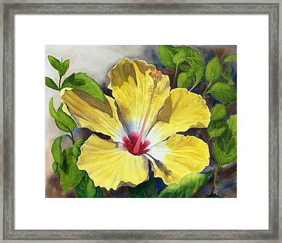 Yellow Hibiscus Framed Print by Robert Thomaston