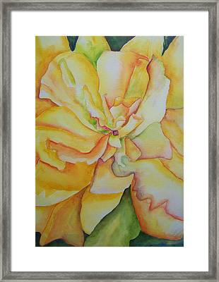 Yellow Hibiscus Framed Print by Sandy Collier