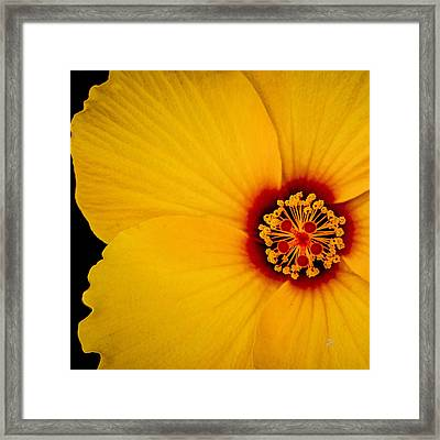 Yellow Hibiscus Squared Framed Print by TK Goforth