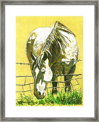 Yellow Horse Framed Print