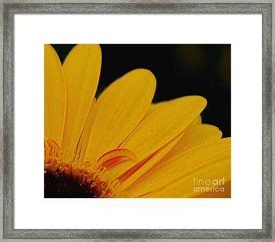 Yellow II Framed Print by Louise Fahy