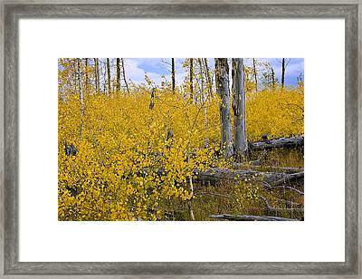 Framed Print featuring the photograph Yellow In Grand Teton by Ken Barrett