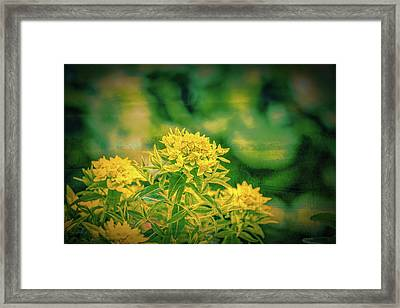 Yellow In Woods Framed Print