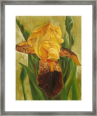 Yellow Iris Framed Print by Alfred Ng