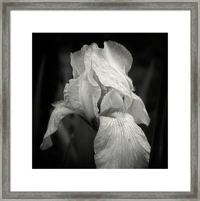 Yellow Iris In Black And White Framed Print by Chrystal Mimbs