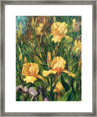 Yellow Irises Framed Print