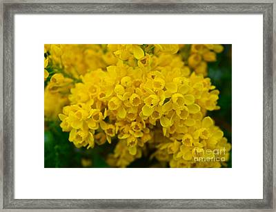 Yellow Is The Joy Of Spring Framed Print