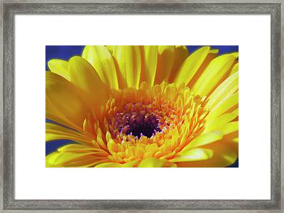 Yellow Joy And Inspiration Framed Print