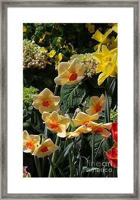 Yellow Framed Print by Kathleen Struckle