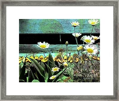 Yellow Kayaks Framed Print
