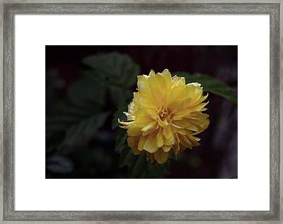 Framed Print featuring the photograph Yellow by Keith Elliott