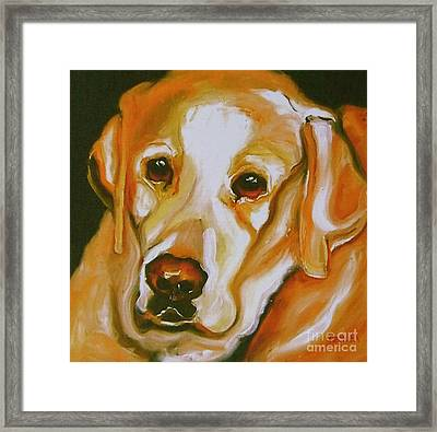 Yellow Lab Amazing Grace Framed Print