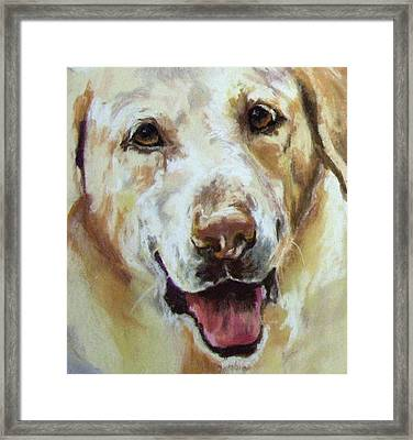 Yellow Lab Framed Print by Debbie Anderson
