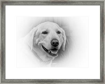Yellow Labrador Framed Print by Allin Sorenson