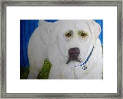 Framed Print featuring the painting Yellow Labrador Retriever Original Acrylic Painting by Barbara Giordano