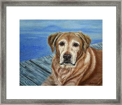 yellow Labrador Framed Print by Sun Sohovich