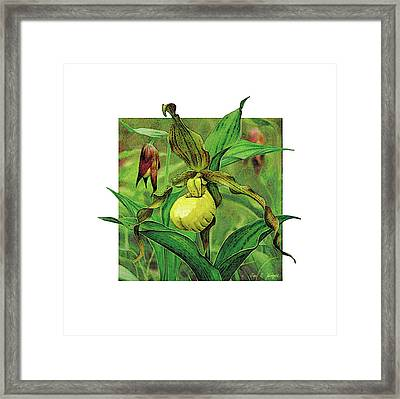 Yellow Lady Slipper Framed Print by JQ Licensing